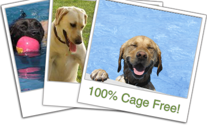 100 Cage Free Dog Daycare Lucky Puppy Country Doggy Daycare