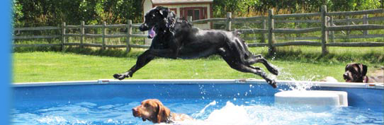 lucky puppy dogs jumping in pool